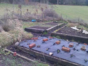 Student volunteers are needed for GreenLancaster's organic garden